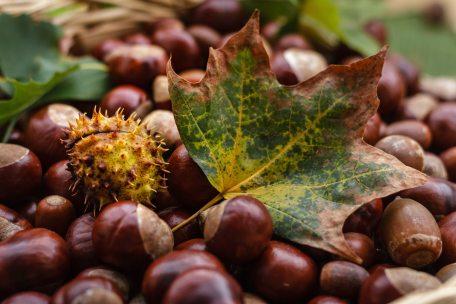 acorn-autumn-blur-247553.jpg