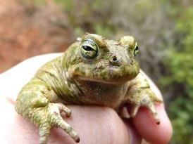 toad-4228889_640.jpg