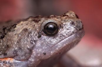 frog-1151694_640.jpg