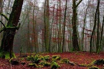forest-2048743_1920.jpg