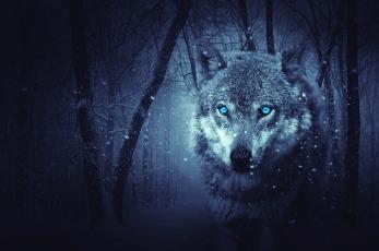 wolf-2227541_640.jpg