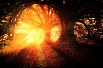 trees-2562083_640.jpg