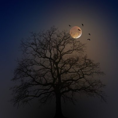 halloween-4582988_640.jpg