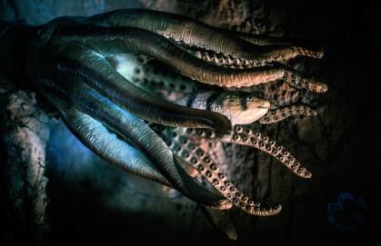octopus-2745286_1920.jpg