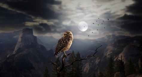owl-2320703_640.jpg