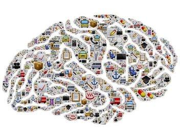brain-954823_640.jpg