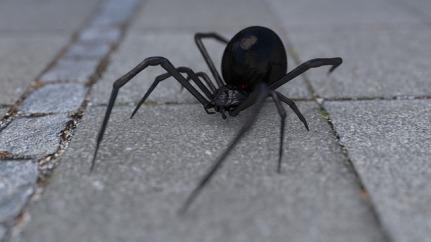 arachnophobia-1703991_640.jpg